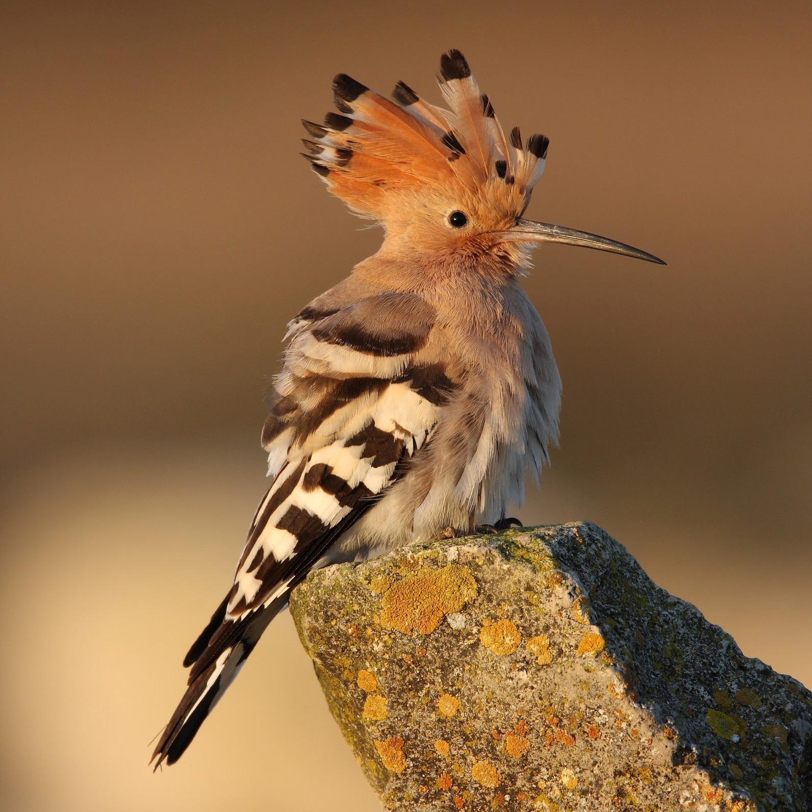 Fitur observación aves